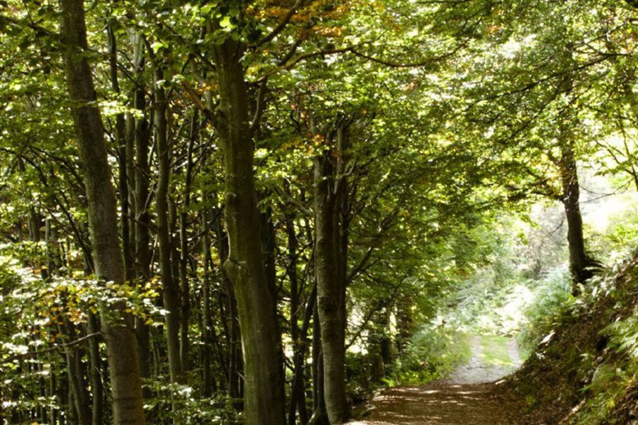 forestbathing 2